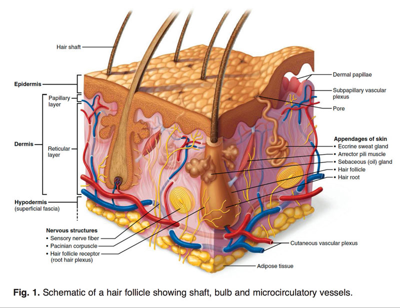 Read more about the article Modern Hair Transplant